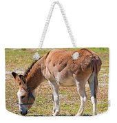 Burro Equus Asinus Weekender Tote Bag