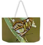 Butterfly Siproeta Stelenes Weekender Tote Bag