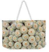 Cactus 35 Weekender Tote Bag