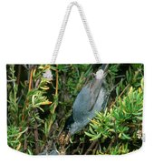 California Gnatcatcher Feeding Chicks Weekender Tote Bag
