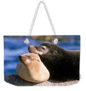 California Sea Lions Weekender Tote Bag by Mark Newman