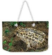 California Toad Bufo Boreas Halophilus Weekender Tote Bag