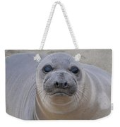 Cambria Baby Seal Weekender Tote Bag