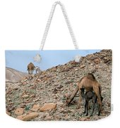 Camels At The Israel Desert -1 Weekender Tote Bag