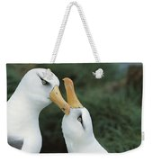 Campbell Albatrosses Courting Campbell Weekender Tote Bag
