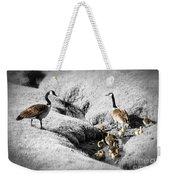 Canada Geese Family Weekender Tote Bag by Elena Elisseeva