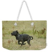 Canary Dog Running Weekender Tote Bag