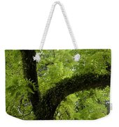 Canopy Of Cedar Elm Weekender Tote Bag