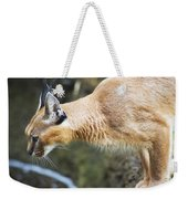 Caracal About To Jump Weekender Tote Bag