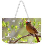 Cardinal In Spring Weekender Tote Bag