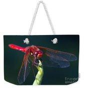 Cardinal Meadowhawk Dragonfly Weekender Tote Bag