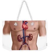 Cardiovascular And Renal Systems Weekender Tote Bag