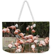Caribbean Flamingos - Phoenicopterus Ruber Ruber Weekender Tote Bag