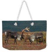Caribou Males Sparring Weekender Tote Bag by Matthias Breiter
