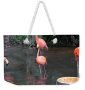 Cartoon - A Flamingo In The Small Lake In Their Exhibit In The Jurong Bird Park Weekender Tote Bag