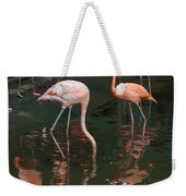 Cartoon - A Flamingo With Its Head Under Water In The Jurong Bird Park Weekender Tote Bag