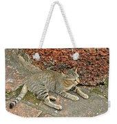 Cat At Wat Mahathat In 13th Century Sukhothai Historical Park-th Weekender Tote Bag