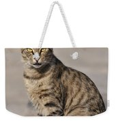 Cat In Aegina Island Weekender Tote Bag
