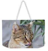 Cat In Athens Weekender Tote Bag
