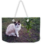 Cat 'n Orange Tree Weekender Tote Bag
