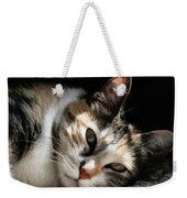 Cat Napping In The Sun By David Perry Weekender Tote Bag