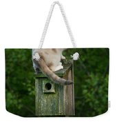 Cat Perched On A Bird House Weekender Tote Bag