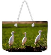 Cattle Egrets Weekender Tote Bag