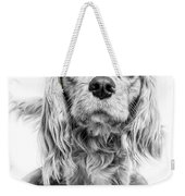 Cavalier King Charles Spaniel Puppy Dog Portrait Weekender Tote Bag