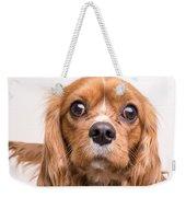 Cavalier King Charles Spaniel Puppy Weekender Tote Bag by Edward Fielding
