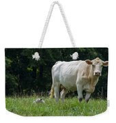 Charolais Cow And Calf In Field Weekender Tote Bag