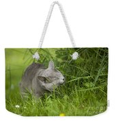 Chartreux Cat And Grass Weekender Tote Bag