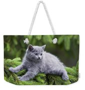 Chartreux Kitten Weekender Tote Bag