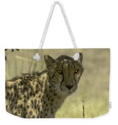 Cheetah Gaze Weekender Tote Bag