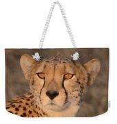 Cheetah Gaze At Sunset Weekender Tote Bag