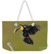 Chestnut-mandibled Toucan Landing Weekender Tote Bag