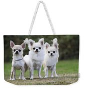 Chihuahua Dogs Weekender Tote Bag