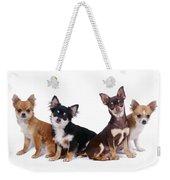 Chihuahuas Dogs Weekender Tote Bag