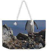 Chinstrap On The Look Out.. Weekender Tote Bag