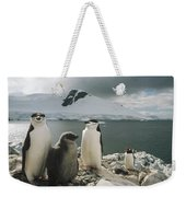 Chinstrap Penguins With Chick Paradise Weekender Tote Bag