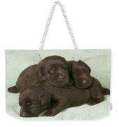 Chocolate Labrador Puppies Weekender Tote Bag