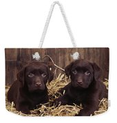 Chocolate Labrador Puppies Weekender Tote Bag
