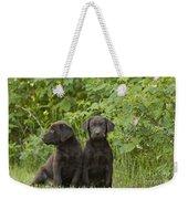 Chocolate Labrador Retriever Puppies Weekender Tote Bag
