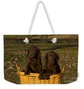 Chocolate Labrador Retriever Pups Weekender Tote Bag