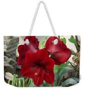 Christmas Red Amaryllis Flowers Weekender Tote Bag