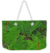 Cinnamon Ferns Along Skyline Trail In Cape Breton Highlands Np-n Weekender Tote Bag