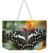 Citrus Swallowtail Butterfly  Weekender Tote Bag