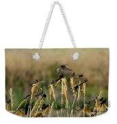 Cliff Swallows Perched On Grasses Weekender Tote Bag