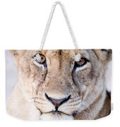 Close-up Of A Lioness Panthera Leo Weekender Tote Bag