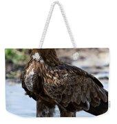 Close-up Of A Tawny Eagle Aquila Rapax Weekender Tote Bag