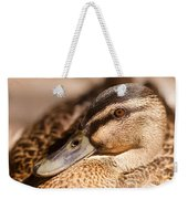 Close Up Shot Of Female Mallard Duck Weekender Tote Bag